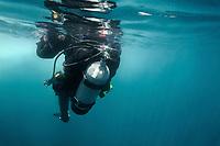 Scuba diver swimming on surface, Santa Cruz Island, Channel Islands National Park, California, Pacific Ocean