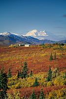North America's highest mountain, tour bus pullout, Park road, turnout to view mountain, autumn tundra ablaze, Denali National Park, Alaska