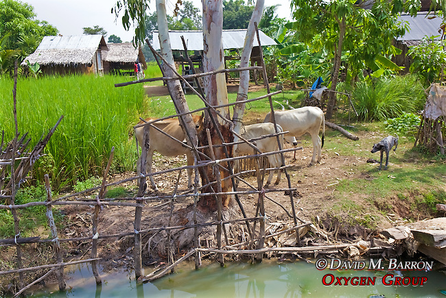 Dith Pran Was Beaten And Tied Up Near This Tree