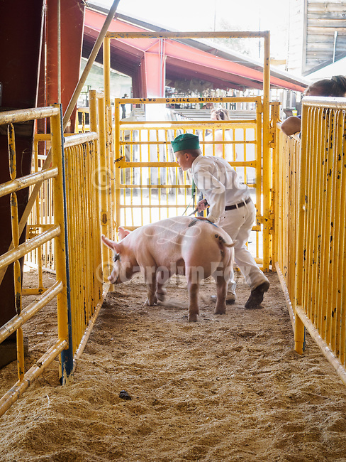53rd Junior Livestock Auction.<br /> <br /> Day 4 of the 79th Amador County Fair--Junior Livestock Auction, Destruction Derby, exhibits, music and more!<br /> <br /> #AmadorCountyFair, #PlymouthCalifornia,<br /> #TourAmador, #VisitAmador