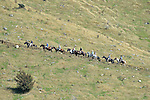 2015 MPC Horse Trek Day 3, 14th March 2015, Speargrass Valley, St Arnaud, Nelson Lakes, New Zealand, Photos: Barry Whitnall/shuttersport