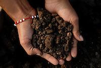 INDIA Madhya Pradesh , organic cotton project bioRe in Kasrawad, fertile soil / INDIEN Madhya Pradesh , bioRe Projekt fuer biodynamischen Anbau von Baumwolle in Kasrawad, fruchtbarer Boden durch Kompost und Fruchtfolge