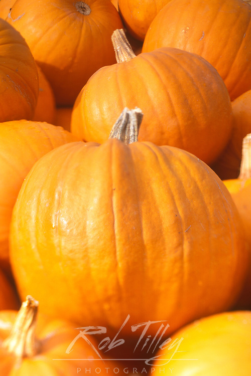N.A., Washington, Chelan County, Pumpkins(selective focus)