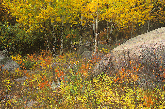 Fall Foliage, Moraine Park, Rocky Mountain National Park, Colorado