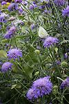 © Joel Goodman - 07973 332324 . 27 July 2013 . Hulme Community Garden Centre , Old Birley Street , Hulme , Manchester M15 , UK . Butterfly in the garden . Hulme is Where the Art Is festival . Photo credit : Joel Goodman