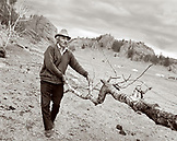 MONGOLIA, Gorkhi-Terelj, farmer carries firewood to his home, Gorkhi-Terelj National Park (B&W)