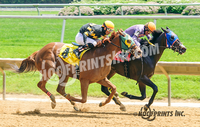 Royal Knowledge winning at Delaware Park on 6/2/16