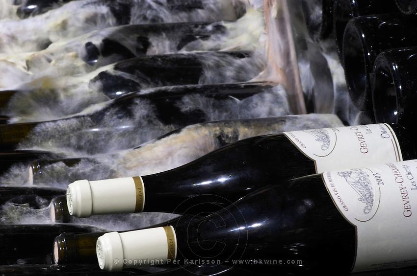 old bottles in the cellar gevrey chambertin 2003 domaine guyot marsannay cote de nuits burgundy france