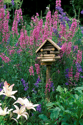 Log birdhouse with blooming lythrum, lilies, and larkspur, Summer, Missouri