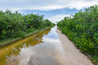 The road in Las Salinas Wildlife Refuge is often flooded during the rainy season, giving rise to a channel-like mud flat for wading birds. Zapata Peninsula, Cuba.