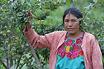 Maria Oralia Jiguan is growing cherries in Buena Vista Bacchuc, a small Mam-speaking Maya village in Comitancillo, Guatemala. The trees were provided by the Maya Mam Association for Investigation and Development (AMMID).