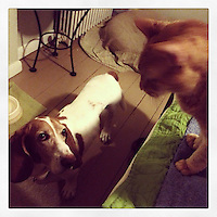 Elwood confronts Charlie as he attempts to jump off the bed February 26, 2013.