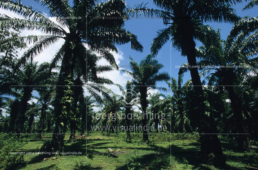 INDIA, Little Andaman, plantation with oil palm on deforested forest / INDIEN, Andamanen, Plantage mit Oelpalmen auf gerodetem Regenwald zur Gewinnung von Palmoel