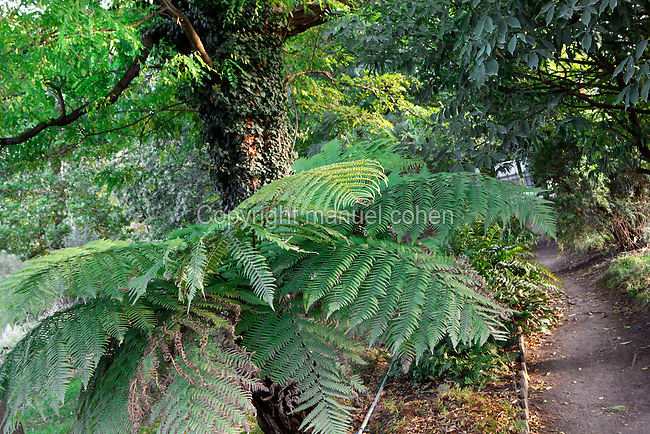 Luxuriant ferns and trees in the Jardin de l'Ecole Botanique (garden of the botanical school), Jardin des Plantes, Paris, 5th arrondissement, France. Founded in 1626 by Guy de La Brosse, Louis XIII's physician, the Jardin des Plantes, originally known as the Jardin du Roi, opened to the public in 1640. It became the Museum National d'Histoire Naturelle in 1793 during the French Revolution. Picture by Manuel Cohen