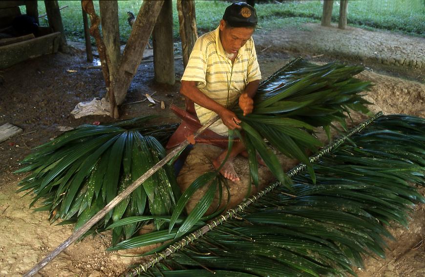 Man interweaving palm lives of Carana (Geomona aff. macrostachys)