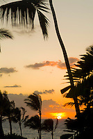 Palm trees are silhouetted against a golden Wailea sunset on West Maui.