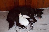 Ko Lipe, Thailand. Cat and dog.