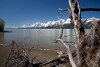 Jackson Lake Shore View of Snow-Capped Grand Tetons, Grand Teton National Park