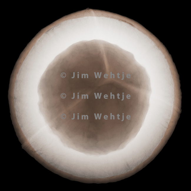 X-ray image of a coconut half (color on black) by Jim Wehtje, specialist in x-ray art and design images.