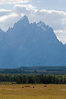 Peaks of the Tetons and horses in the distance