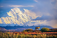 DIGITAL COMPOSITE: (sky and clouds added)  Bull caribou walks in front of the North face of Mt. Denali, Denali National Park, Alaska.