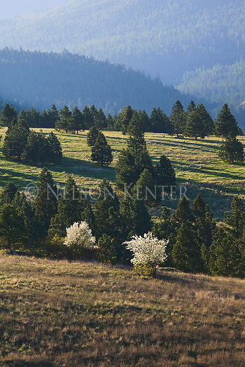 Morning sun shines on the south side of Mount Sentinel in Missoula, Montana