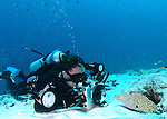 photographer shooting Leopard moray