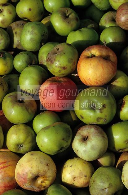 Europe/France/Bretagne/22/Côtes d'Armor/Pleudihen-sur-Rance: La récolte des pommes à cidre