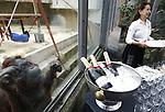 Foto: VidiPhoto<br /> <br /> RHENEN – De 31 Aldabra schildpadden van Ouwehands Dierenpark in Rhenen hebben een gloednieuw tropisch verblijf. Donderdag werd dat onder grote belangstelling geopend. Ouwehands heeft de grootste collectie reuzenschildpadden ter wereld.De Aldabra is de grootste landschildpad die er bestaat. Ze kunnen 170 kilo zwaar en 80 jaar oud worden. De oudste en bekendste schildpad van Ouwehands is Sjaak (41 jaar en ruim 100 kilo). Hij laat zich graag aaien door de verzorgers. In het verblijf is het constant 29 graden, met een hoge luchtvochtigheidsgraad. Aldabra schildpadden werden in de tijd van de VOC meegenomen als voedsel aan boord omdat ze bijna een jaar zonder voedsel en water kunnen. Foto: Al die lekkere hapjes en drankjes, maar er niet bij kunnen...