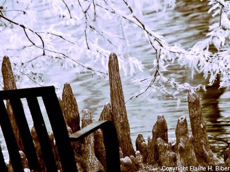 Cypress knees at Swan Lake