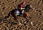October 31, 2019: Breeders' Cup Turf entrant Mount Everest, trained by Aidan P. O'Brien, exercises in preparation for the Breeders' Cup World Championships at Santa Anita Park in Arcadia, California on October 31, 2019. John Voorhees/Eclipse Sportswire/Breeders' Cup/CSM