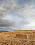 A number of hay bales trail off in the distance in a cut field near a farming road in a remote part of the Washington State Palouse.