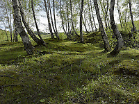 FOREST_LOCATION_90030