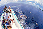 Observing Spinner Dolphins
