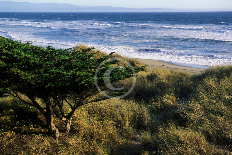 California, Santa Cruz County, Pajaro Dunes, Beach and dune grass