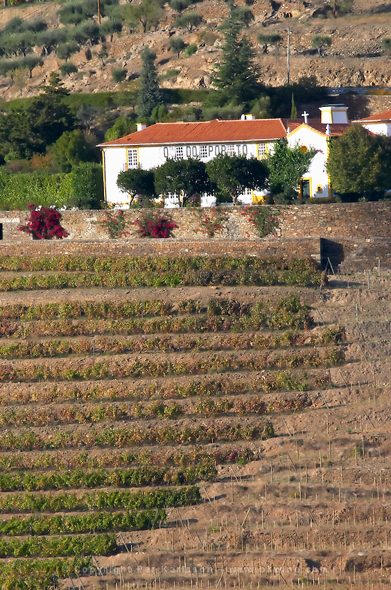 vineyard quinta do porto the house of dona antonia ferreira douro portugal