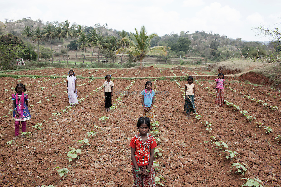 TAMIL NADU, INDIA MARCH 2014:<br />Children in a cotton field near Salem, one of the areas with the most 'high density' fields for cotton cultivation in Tamil Nadu, 05 March, 2014 @GDS