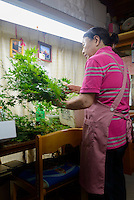 Farmer Yukiyo Nishkage packing maple leaves at her home, Kamikatsu, Katsuura, Tokushima Prefecture, Japan, July 7, 2014. The Irodori Project is based in the mountain town of Kamikatsu, Tokushima Prefecture. Farmers - many of them elderly - grow leaves and flowers to use to decorate Japanese food in restaurants and hotels across the nation.