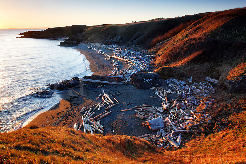 Driftwood strewn beach, Grandmas Cove, American Camp, San Juan Island National Historical Park, San Juan Island, San Juan County, Washington, USA