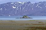 Penguins dot a beach of South Georgia Island