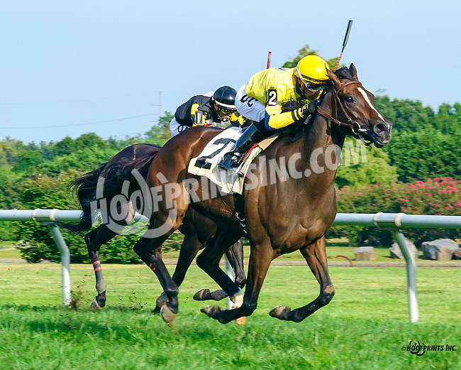 Ancient Goddess winning at Delaware Park on 9/21/16