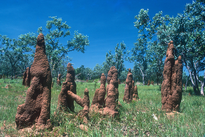 Bizarre looking Termite Mounds outback Australia Top End Northern territory