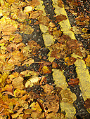 Yellow leaves on double yellow lines