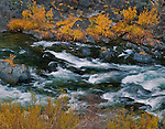 Fall colors along the North Yuba River, near Downieville, Sierra County, California