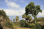Israel, Carmel coast, the man made passage of Nahal Oren at the foothill of Karta ruins.
