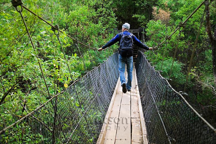 A hiker crosses a swing bridge in Beedeulp National Park.  Pemberton, Western Australia, AUSTRALIA.