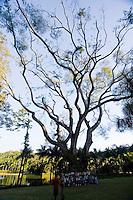 Brumadinho _ MG, Brasil..Arvore em um jardim botanico...Foto: JOAO MARCOS ROSA /  NITRO