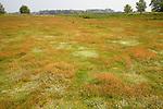 Biodiversity of wildflowers and different grasses in Spring on heathland at Sutton Heath, Suffolk, England
