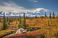 Tents at the Wonder Lake campground and Mt. Denali, Denali National Park, Alaska.