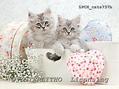 Xavier, ANIMALS, cats, photos+++++,SPCHCATS737B,#a# Katzen, gatos